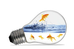 Little red fish in a lamp Royalty Free Stock Photography