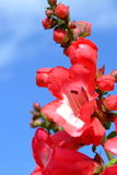 A little red flowers and blue sky Stock Photos
