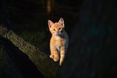 Little red-haired kitten stock photos