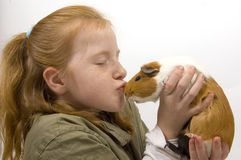 Little red head girl is kissing with a guinea pig Stock Photography