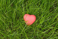 Little red heart lying on green grass Stock Images
