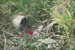 Little red heart pillow falls in the culvert rice field stock image