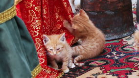 Little red homeless kittens play with each other on the street in Baku,Azerbaijan. Little red homeless kittens play with each other on the street in Azerbaijan stock video footage