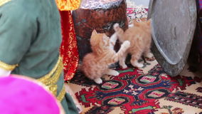 Little red homeless kittens play with each other on the street in Baku,Azerbaijan. Little red homeless kittens play with each other on the street in Azerbaijan stock footage