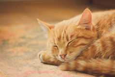 Little Red Kitten Sleeping On Bed Stock Image
