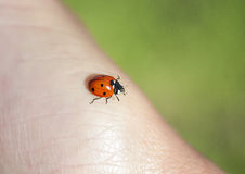 Little red ladybug crawling on a human hand Royalty Free Stock Photos