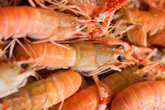 Little Red Lobsters. A set of joined red lobsters Stock Photo