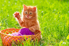 Little red playful kitten with a wool of thread on the green gra Royalty Free Stock Image