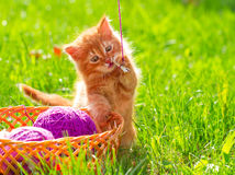 Little red playful kitten with a wool of thread on the green gra Stock Photography