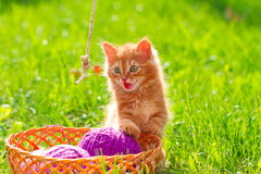 Little red playful kitten with a wool of thread Royalty Free Stock Images