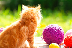Little red playful kitten with a wool of thread on the outdoors Royalty Free Stock Image