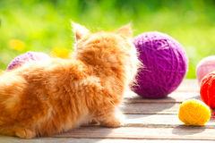 Little red playful kitten with a wool of thread on the outdoors Royalty Free Stock Images
