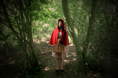 Little red riding hood. In the wood Stock Images
