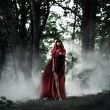 Little Red Riding Hood in the wild forest royalty free stock images