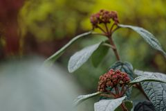 Little red ripe plant in park blooming in springtime stock images