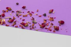 Little red roses on violet and white background. Little red roses with petals on violet and white background Royalty Free Stock Photography