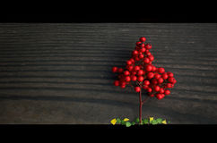 Little red tree. Red viburnum branch with some leafs on the wood floor royalty free stock images