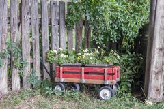 Free Little Red Wagon  Of Flowers In Garden Stock Image - 99922251