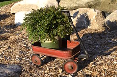 Little red wagon Stock Images