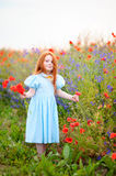 Little redhead girl collects field wild flowers at spring poppy Stock Images
