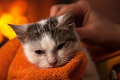 Little rescued kitten after cleaning enjoys a soft blanket and c. Aresses by the fire - relaxing in her new home, closeup, shallow depth Stock Images