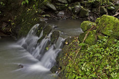 Little rippling brook. A little rippling brook in the forest royalty free stock image