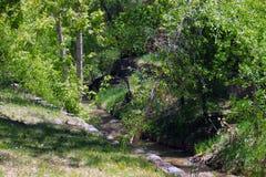 Little River, Big Landscape. A little river flows through a big woods Stock Images