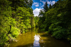 The Little River, in Dupont State Forest, North Carolina. Stock Photography