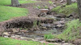 Little River flow in the park stock footage
