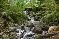 Little River In The Forest Royalty Free Stock Photography