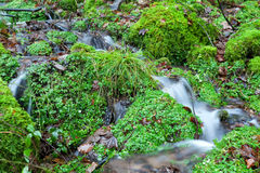Little river in green forest Royalty Free Stock Photo