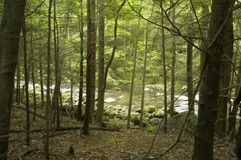 Little River through Trees Royalty Free Stock Image