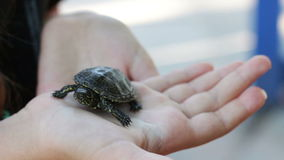 The little river turtle in the hand stock video footage