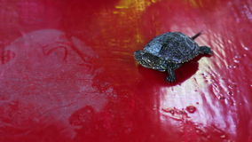 The little river turtle in the hand stock footage