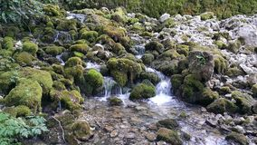 Little river and waterfalls. Little river Vrelo (Godine) on the Tara mountain, national park in western Serbia. Translated in English the name of this river is stock image