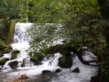 Little river and waterfalls. Little river Vrelo (Godine) on the Tara mountain, national park in western Serbia. Translated in English the name of this river is royalty free stock image