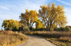 Little Road on the Colorado Prairie. Curved dirt road in autumn on the colorado prairie, with majestic yellow-foliaged cottonwood trees stock photos