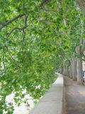 Little road through row of trees Royalty Free Stock Photography