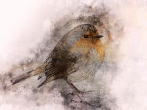 Little robin Watercolor Digital Painting vintage Stock Photography