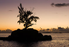Little rock island with trees at sunrise. Royalty Free Stock Photo