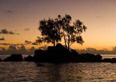 Little rock island with trees at sunrise. Stock Images