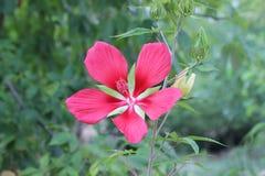 Little Rock-Zoo-Blumen - 2 Lizenzfreies Stockbild