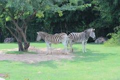 Little Rock-Zoo-Tiere -4 Lizenzfreies Stockbild