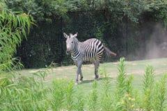 Little Rock-Zoo-Tiere -2 Lizenzfreies Stockfoto