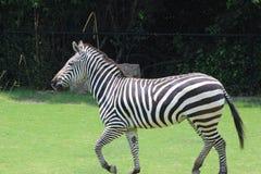 Little Rock-Zoo-Tiere Stockfoto