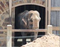 Little Rock-Zoo-Tiere - Elefant Lizenzfreie Stockbilder
