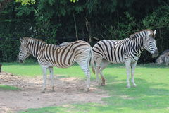 Little Rock zoo zwierzęta -3 Fotografia Stock