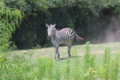 Little Rock zoo zwierzęta -2 Zdjęcie Royalty Free