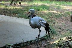 Little Rock zoodjur - blå kran 2 Fotografering för Bildbyråer