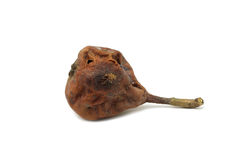 Little rotten pear Stock Photography